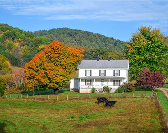 The old Mountain Farm, Fall, Cows, Autumn, orange, red, yellow