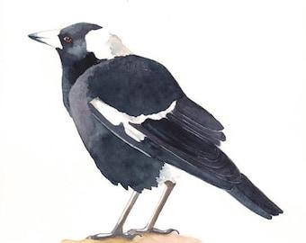 Magpie painting print of watercolor painting A4 size, bird art, wall art, home decor, australian bird art