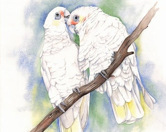 Corellas print of watercolor painting C0815 - A4 size print wall art print - bird art print