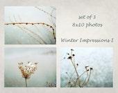 Nature photography set, Winter plants, Abstract, Aqua, Grey, Gray, Ice, Cold, Set of 3, Winter Impressions I