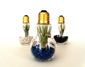 Single DIY Terrarium Kit Think SPRING Light Bulb Terrarium You Create Yourself