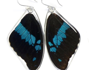 Real Blue Swallowtail Oribazus Butterfly (Papilio oribazus) (top/fore wings) earrings