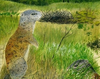 Animal cards, Franklin's ground squirrel on blank card - watercolor