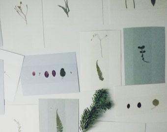 Set of 5 nature postcards