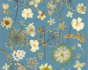 Digital Download White Pressed Flowers on blue paper background collage Print