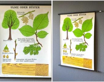 Botanical poster, Vintage tree print, school poster, rustic wall decor, educational poster botanical