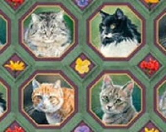 Cat Nap Frames Feline Quilting Cotton Fabric 42 Frames Springs Creative 35573
