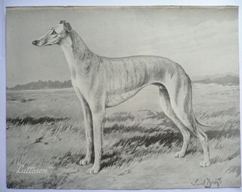 GREYHOUND dog PRINT Lattoson print Vintage 1935 bookplate Unique collectors gift, birthday, anniversary dog lover present Whippet dog