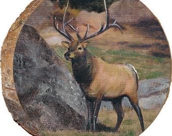 Startled Elk - DAE009