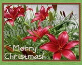 Note Cards:  Christmas Red Lilies; photographs by MM