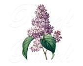 LILAC Instant Download large Digital Image in color, Digital Collage Sheet, vintage flowers REDOUTE illustration 024