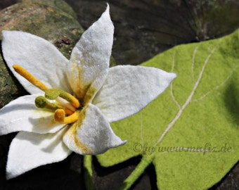 Lily white and very classy for home or jewelry for wedding