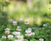 Wildflowers Photography - Nature Colour Photography - Green Whimsical Shabby Chic Romantic Wall Art Valentine's Day Gift Bedroom Wall Decor