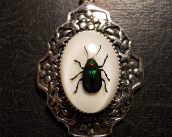 Rainbow Beetle Preserved Scarab Specimen Cameo Necklace