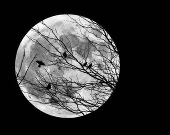 Full Moon Photo, Moon Picture, Bird Picture, Moon and Birds, Blackbird Photo, Raven Print, Bird Print, Moon Photo, Full Moon Print
