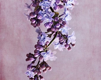 Purple lilac photography, floral art print, flower photography, violet wall art, lilac wall decor, photo art, feminine bedroom art