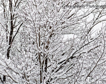 Winter Picture, Snow Covered Branches, Landscape Photography, Wall Art, Home Decor, Upper Peninsula of MI