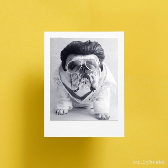 items similar to blank card english bulldog card the