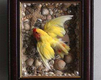 Taxidermy Lovebird in English seashell grotto frame