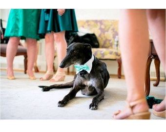 Dog Wedding Shirt Collar and Bow Tie (custom colors)