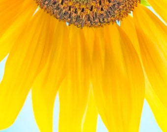 Sunflower #2 with blue and yellow- wall art