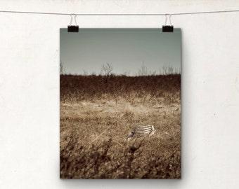 Skeleton Photograph, Creepy Art, Alberta Prairies, Life Cycle, Autumn