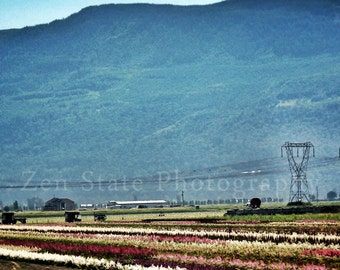 Field of Flowers Landscape Print. Landscape Photo Wall Art. Photography Print, Framed Print, or Canvas Print. Home Decor.