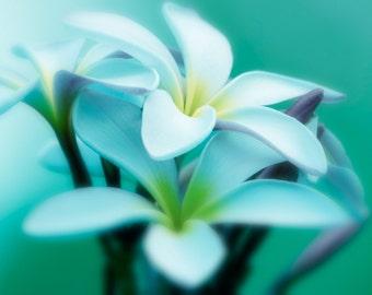 Plumeria Photograph Turquoise Teal Aqua Lavender Dreamy Photography Plumeria Photo Pastel Flower Nature Photography Nature Wall Art Print