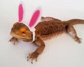 Bearded Dragon Clothing! Easter Bunny!