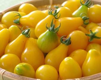 50 - Heirloom Tomato Seeds - Yellow Pear - Heirloom Yellow Tomato Seeds, Yellow Pear Tomatoes, Yellow Tomato Seeds, Non-GMO Tomato Seeds