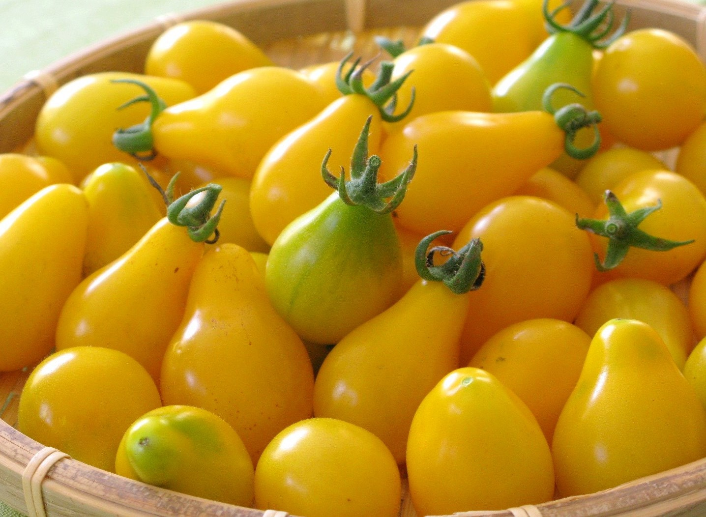 50 Heirloom Tomato Seeds Yellow Pear Heirloom Yellow