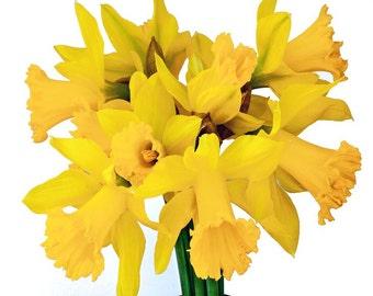 Daffodils, bouquet, yellow, spring, bulbs, macro photography, garden art, cheerful, happy, inspirational