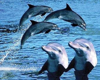 Bottlenose Dolphin Fridge Magnet 7cm by 4.5cm,