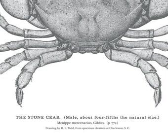 Stone Crab Art in Black and White-Beach Decor Nautical Decor Crab Print Wall Art Beach Art Nautical Print Ocean Home Decor Father's Day