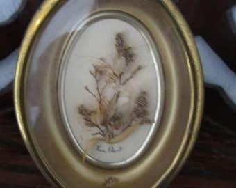 Antique Framed Ladybug & Dried Bee Preserved Plant Flower