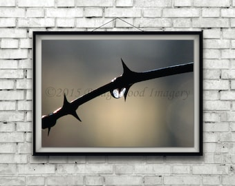 Raindrops on Thorns Print, Nature Color Photograph of Thorns in the Rain, Water Drops Photography, Spring Rain Picture,