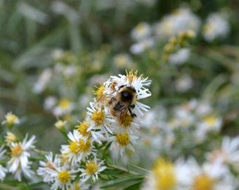 Bumblebee Flower 5 Plant Habitat 2015 Seed Kit
