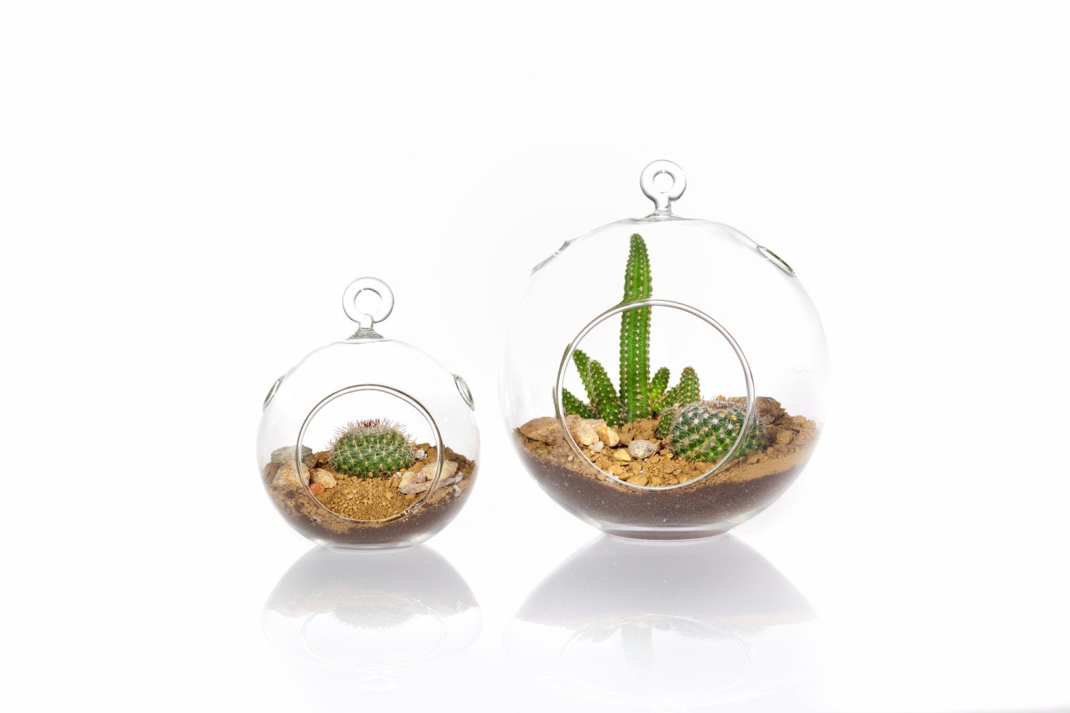 mini large globe succulent terrarium kit by shopsucculents. Black Bedroom Furniture Sets. Home Design Ideas