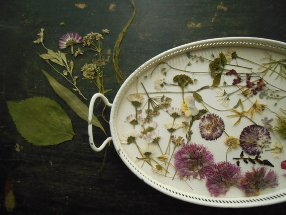 Dried pressed flowers natural craft supplies real pressed for Dried flowers craft supplies