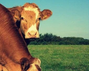 Cow Print / Cow Photograph / Animal Photography / Home Decor / Wall Art / fpoe / Brown / Orange / Blue Sky