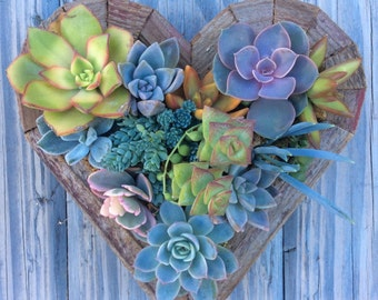 TINY Hanging Heart Succulent Vertical Garden