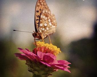 Butterfly photograph, Fine Art Photography, photo print 8x8, butterfly photography, flower art, flower photography, butterfly art, wall art