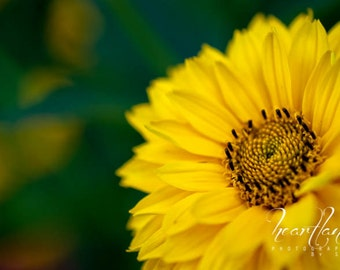 Large Flower Print, Yellow and Green, Large Wall Art, Big Photo Print, Yellow Flower Photo, Midwest Photography, Big Macro Photography