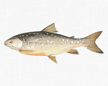 Popular items for fish clipart on Etsy