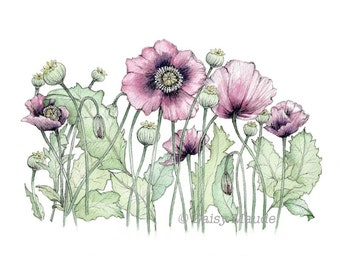 Wild Poppies - Flowers Watercolour Painting Ink Pen Illustration Fine Art Print - A4