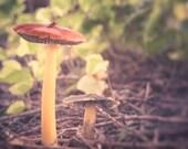 Mushroom Photo, Red Mushroom Decor, Spell Garden, Enchanted Fairy Garden, Fairytale