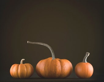 Pumpkin Photography, Thanksgiving Decor, Rustic Halloween Photo | Orange