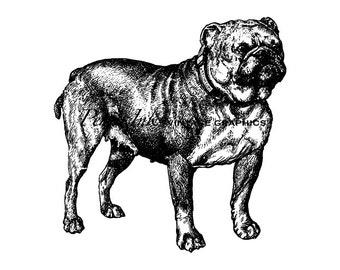 Bulldog Clipart Etsy