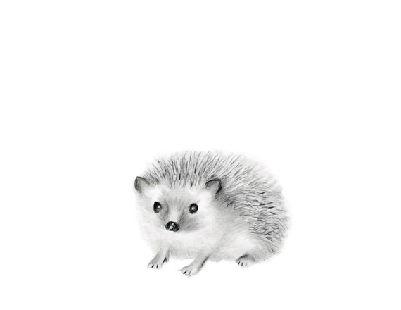 Line Drawings Of Baby Animals : Woodland nursery art hedgehog pencil drawing animal sketch