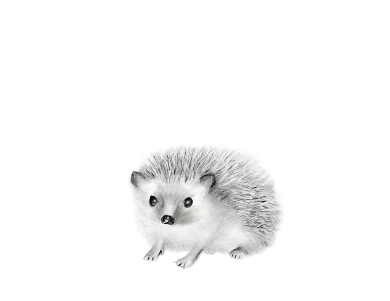 Woodland Nursery Art Hedgehog Pencil Drawing Animal Sketch